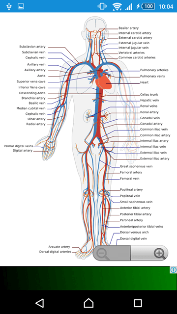 6 Best Anatomy Apps For Android