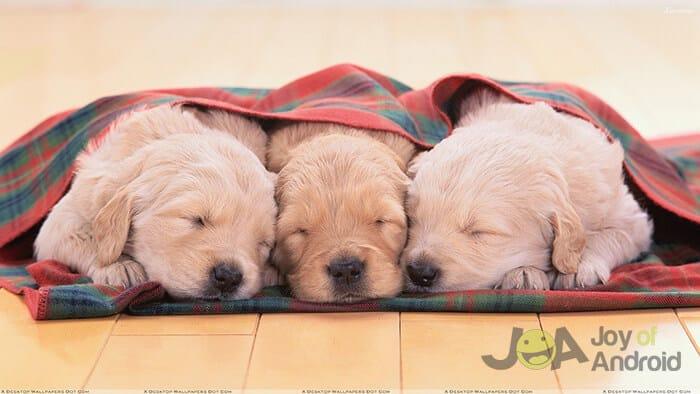 puppies-facebook-live