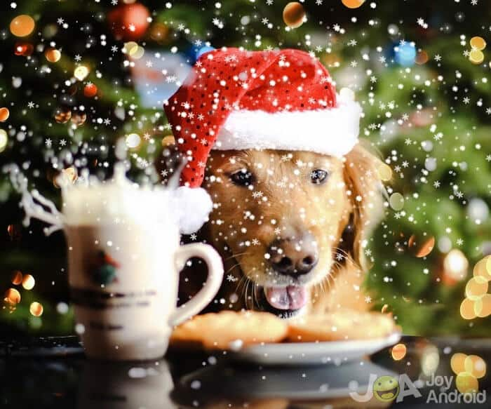 dogs christmas wallpapers