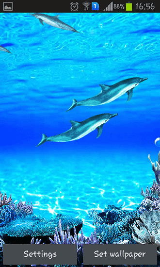 Dolphin Sound Live Wallpaper