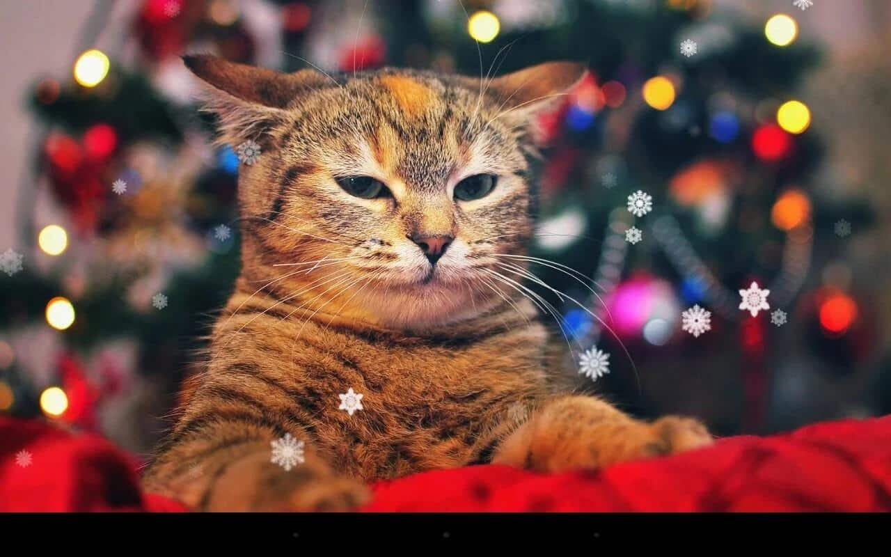 Xmas Cat Live Wallpaper KKPICTURE 1