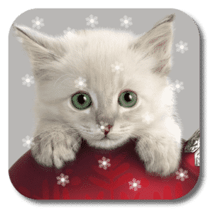 Xmas Cat Live Wallpaper KKPICTURE
