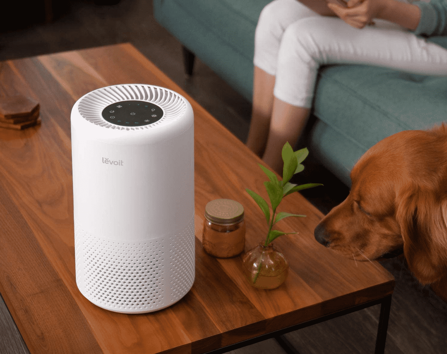 The Best Air Purifier - Featured Image
